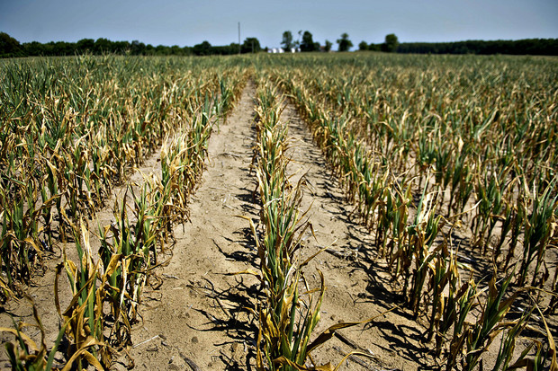 Climate change threatens to put back the fight to eradicate hunger by decades (OXFAM)